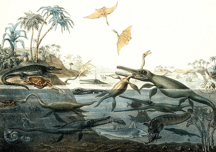 Mary Anning'in Yaşamı ve Paleontolojinin Doğuşu