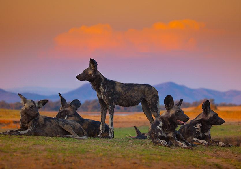 Çığır Açacak Bir Doğa Belgeseli: Soylar