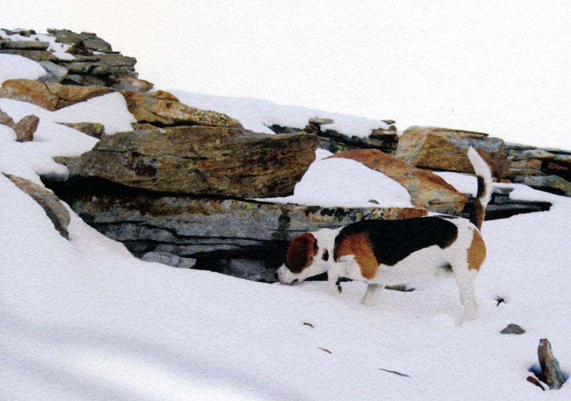 Sırsız Bir Hayal Gücü: Kar, Köpek, Ayak
