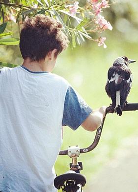 Aritmetik İyi, Kuşlar Geometri