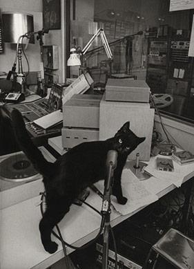 Bir Kedi Yaşam Koçu Olabilir mi?