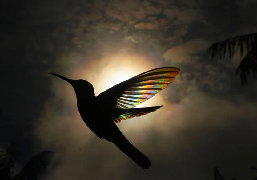 Christian Spencer'dan Gökkuşağı Efektli Kuş Fotoğrafları