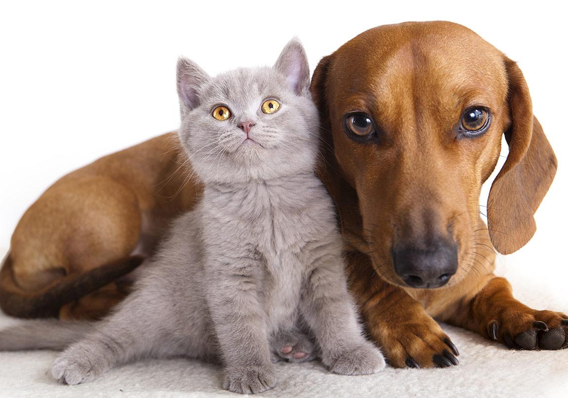Köpek ve Kedi Severler İçin Felsefe