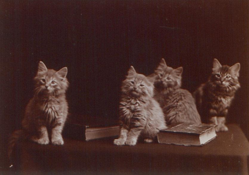 """Türk Edebiyatındaki """"Geçmiş Zaman Kedileri""""nin Hikâyeleri"""