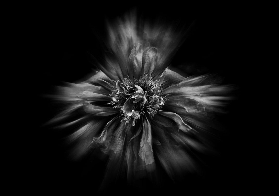 Edebiyatın Kötülük Çiçekleri