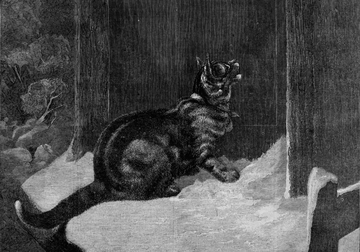 """Erhan Bener'in """"Kedi ve Ölüm""""ü Yeniden"""