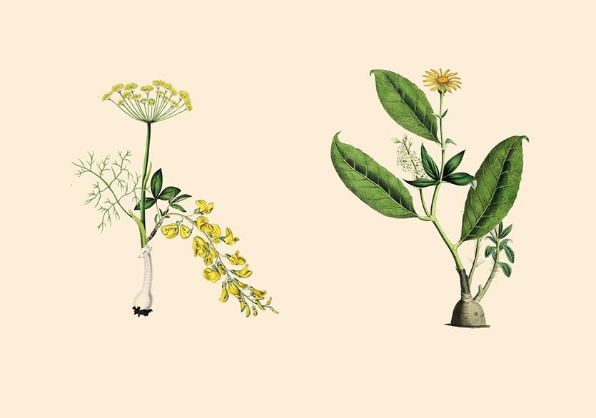 Dünyaya Bitkilerin Gözünden Bakmak