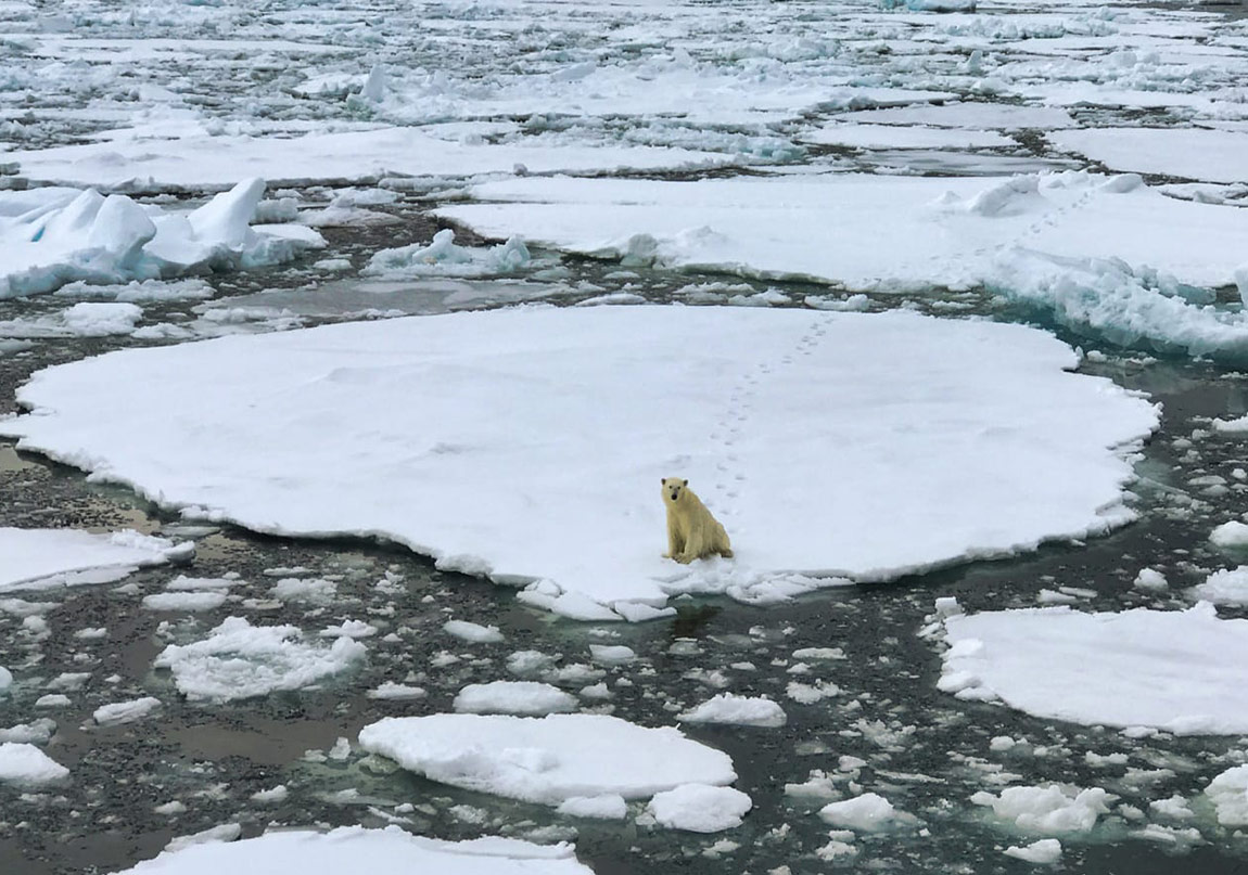 İklim Krizi, Politika ve Aktivizim