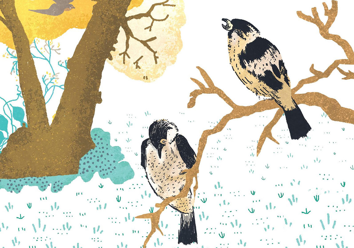 Güzel Kuşlar Güzel Kuşlarla Uçar