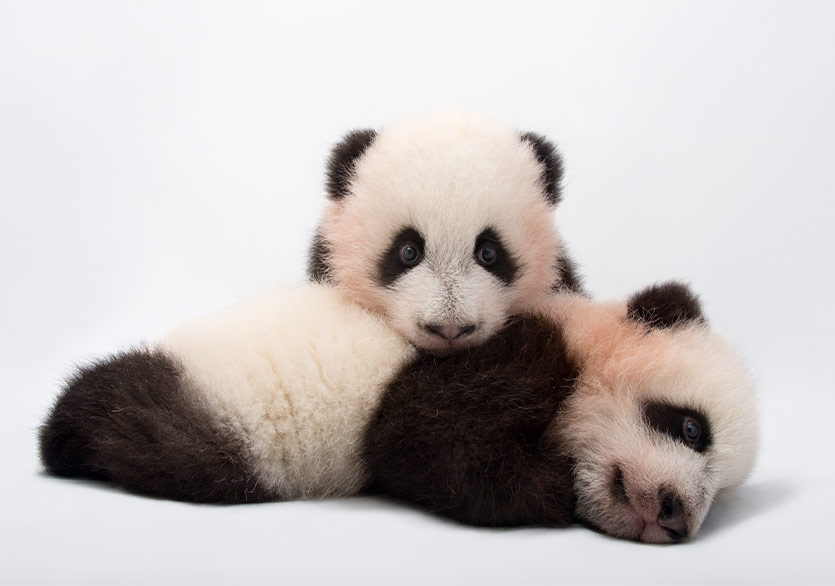 National Geographic Sergisi Photo Ark Dijital Ziyarete Açıldı
