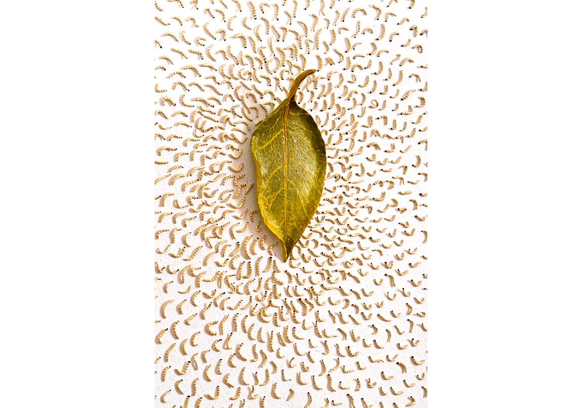 """""""Aldanma"""",Modelaj hamuru üzerine yağlıboya,Ø 118 cm,2016"""