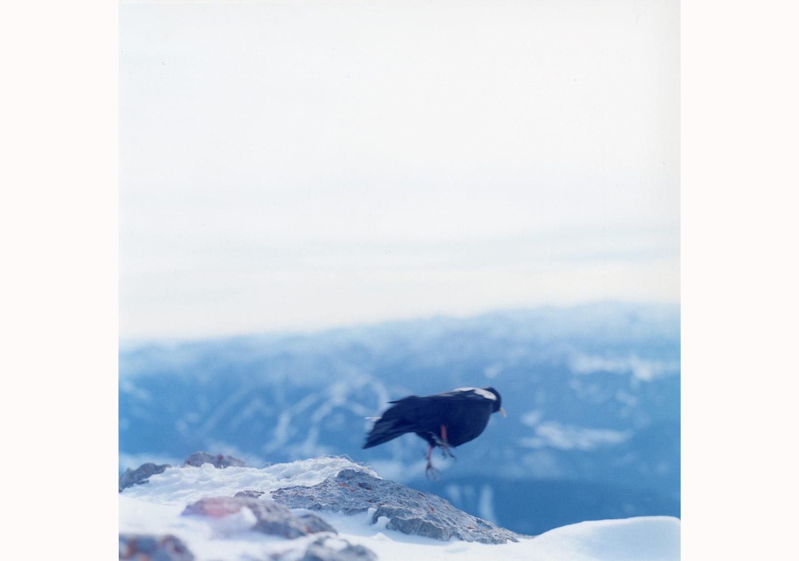 'İsimsiz', 'Search for the Sun' serisinden, 2015 © Rinko Kawauchi