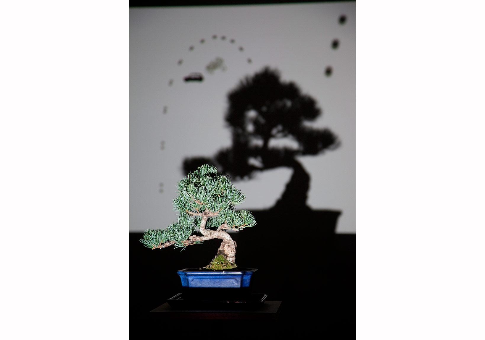 Bonsai 2014, video enstelasyon