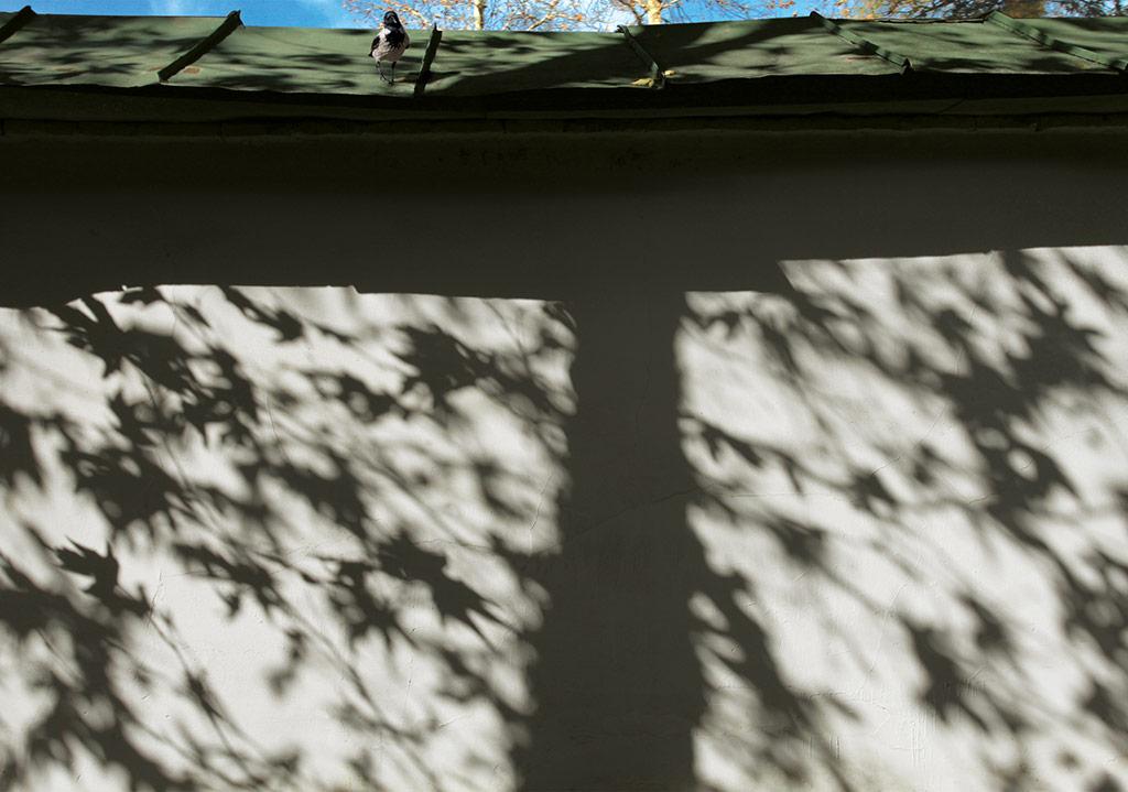 İsimsiz, 'Gölgeler' serisinden © Abbas Kiarostami, CerModern izniyle