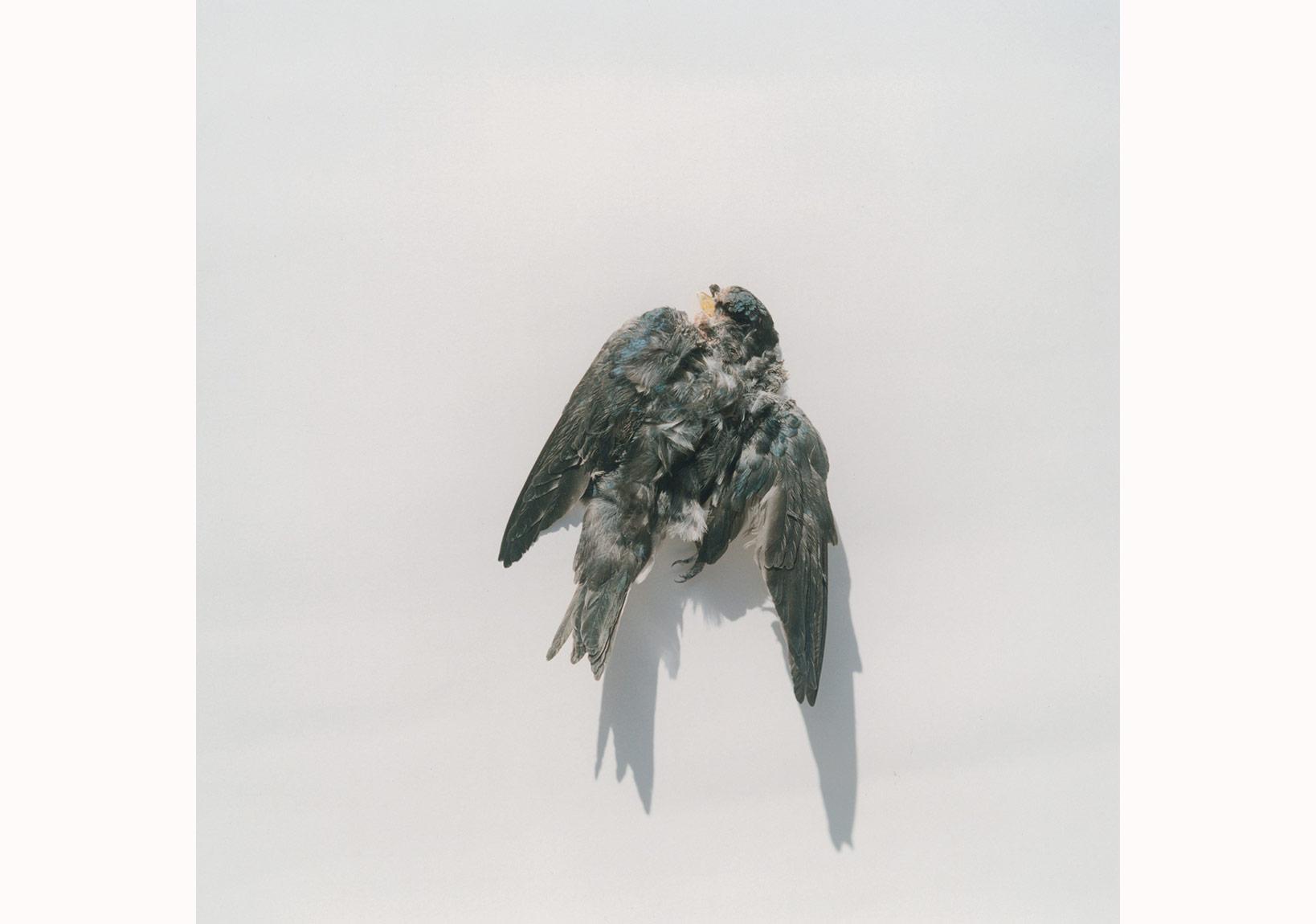 'İsimsiz', 'Illuminance' serisinden, 2009 © Rinko Kawauchi, Galerie Priska Pasquer izniyle