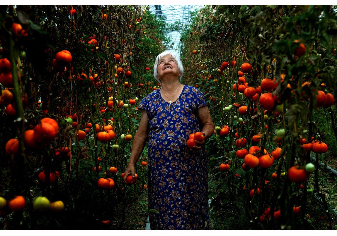 Tolga Sezgin Mari Aydın Türkiye'deki son Ermeni köylerinden biri olan Vakıflı'da seradan domates topluyor. Köyde 2004 yılından beri organik tarım yapılıyor. Antakya, 2008