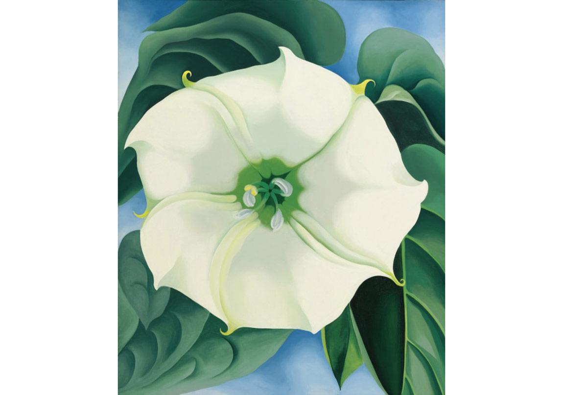 Jimson Weed/White Flower No. 1 (Boru Çiçeği/ Beyaz Çiçek No.1) 1932