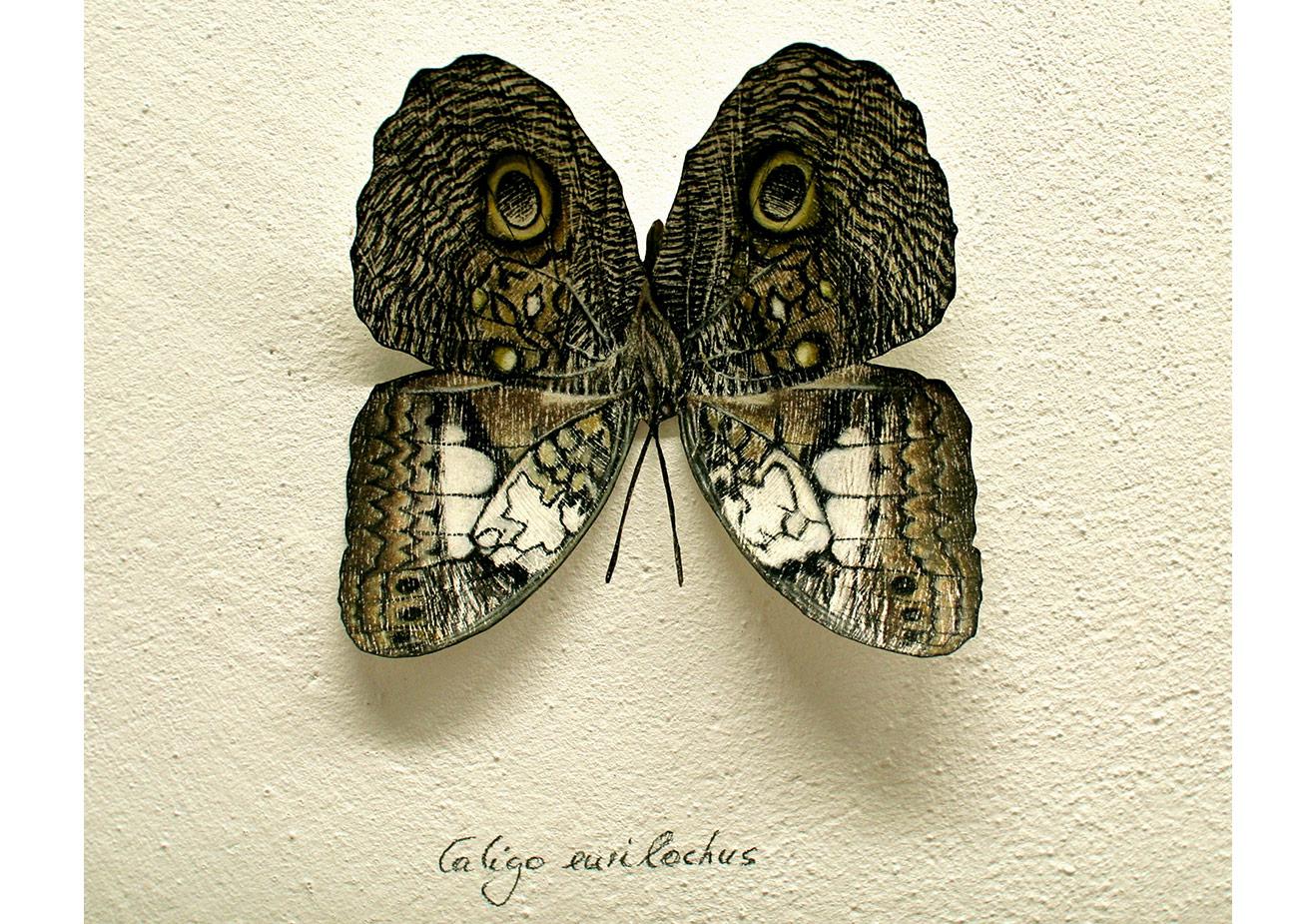 Five eyes (Caligo) - Kağıt üzerine pastel ve kağıt kesim, 13cm x 13cm x 3cm, 2015 - Copyright Svenja Schüffler