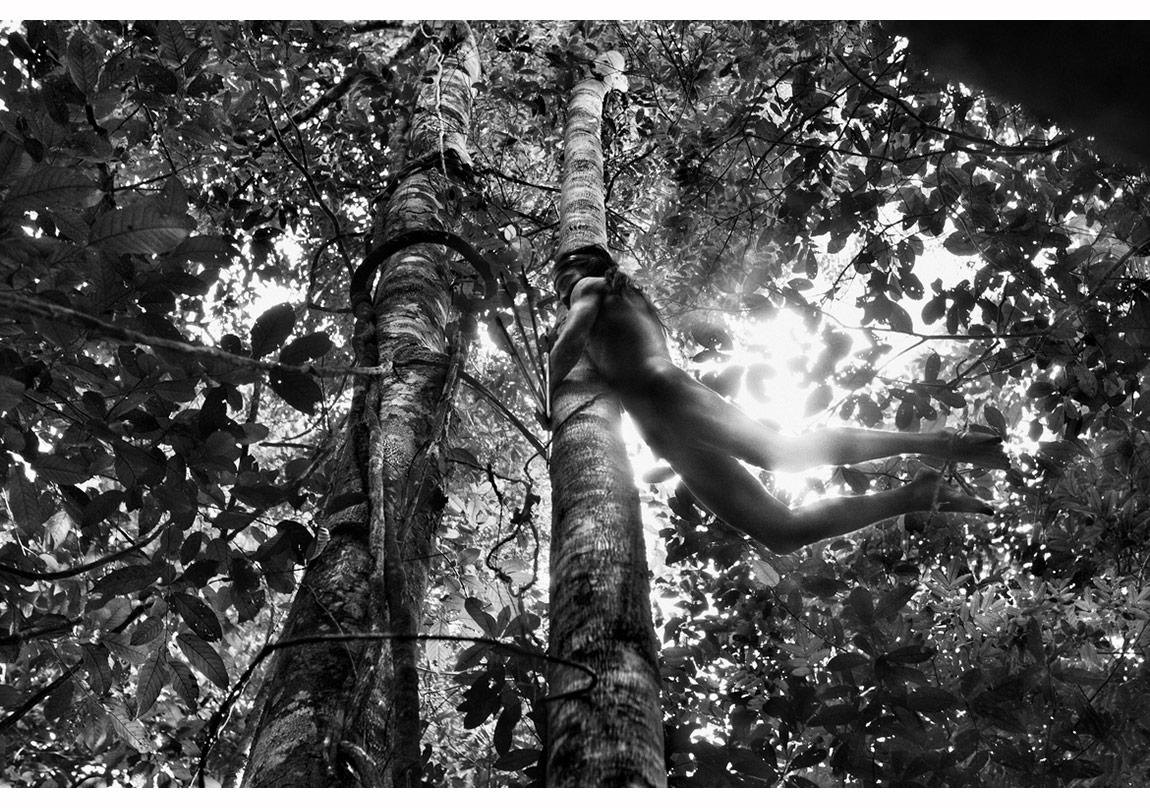 Pará Eyaleti, Brezilya, 2009 © Sebastião Salgado, Sebastião Salgado/Amazonas Images/Sony Pictures Classics izniyle