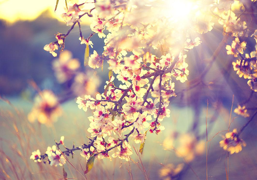 Bahar Geldi Güneş Açtı