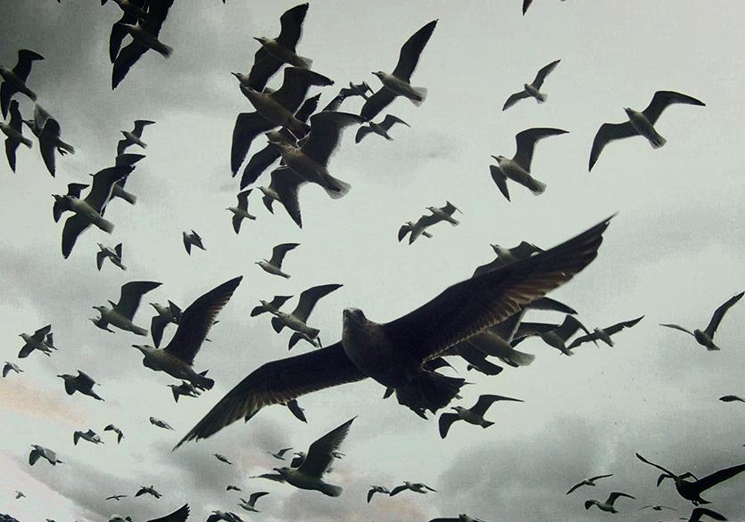 Hakikatten Uzaklaştıran Filmler Kundura Sinema'ya Geliyor