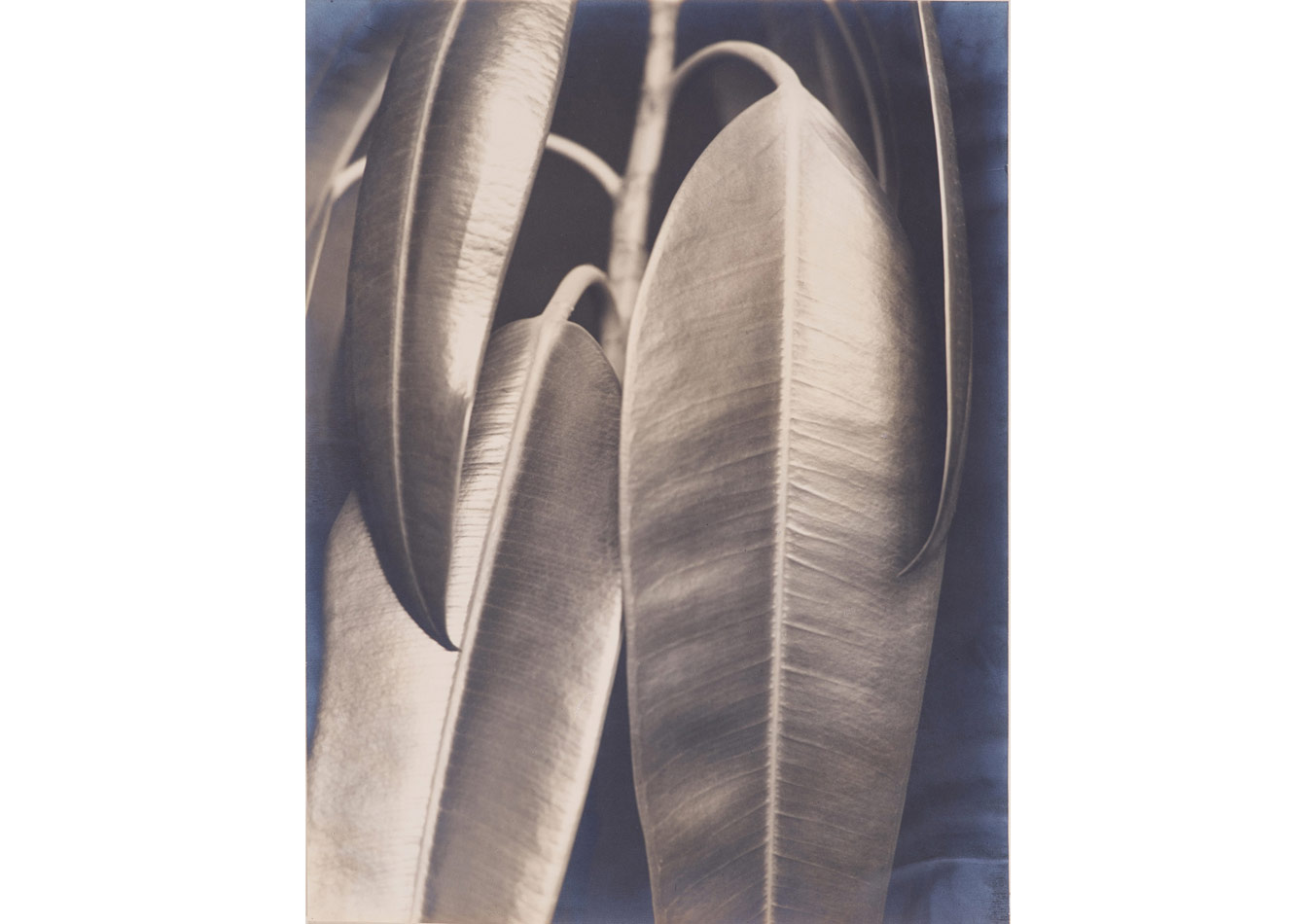 Aenne Biermann (1898-1933), Kauçuk, yaklaşık 1927 © Museum Folkwang Essen