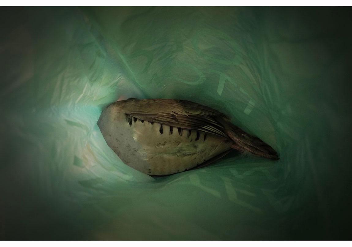 """Keklik"", 2012, Yerleştirme, Detay, Dying Eye - Taipei."