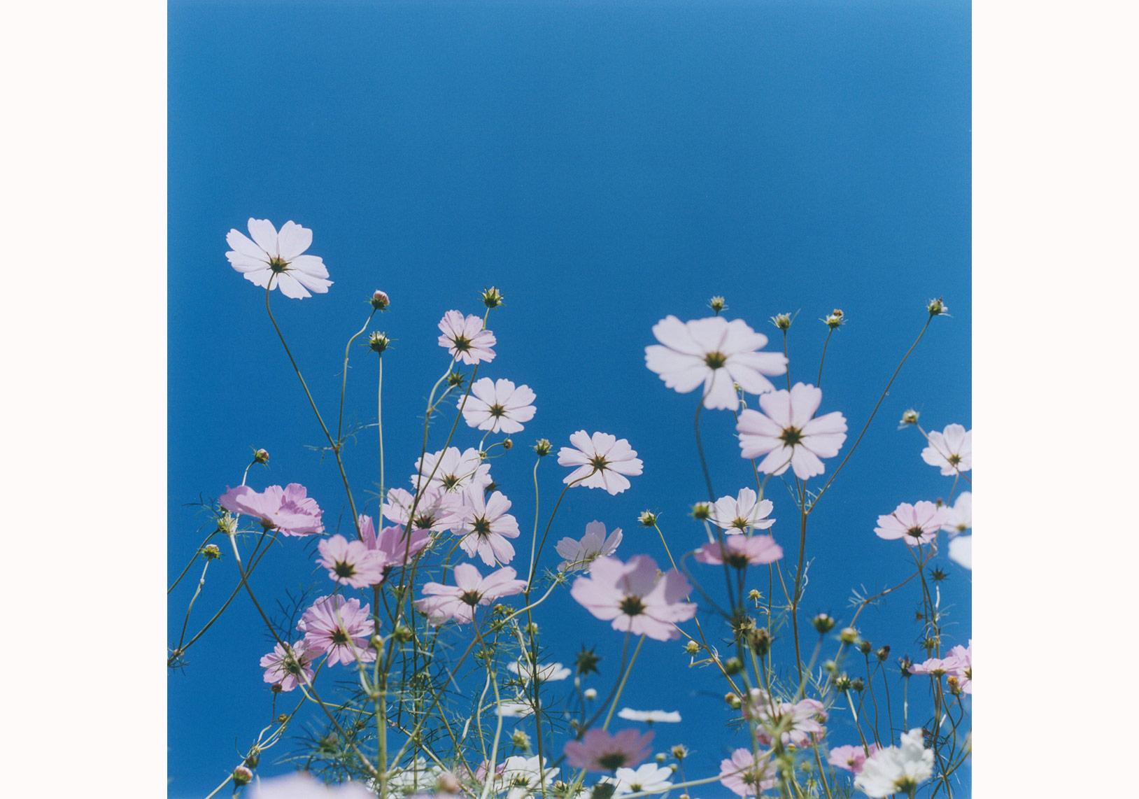 'İsimsiz', 'Aila' serisinden, 2004 © Rinko Kawauchi
