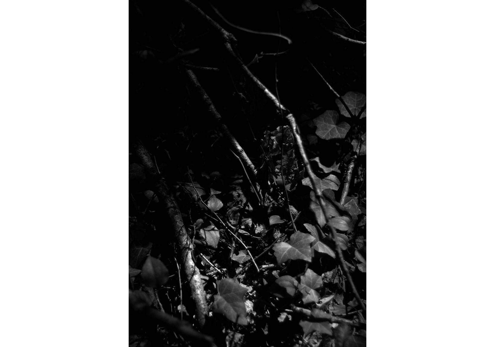 Aslı Narin, Rüzgarı Düşün/Think of the Wind(3), 2015, Diasec baskı/print, 40x27cm