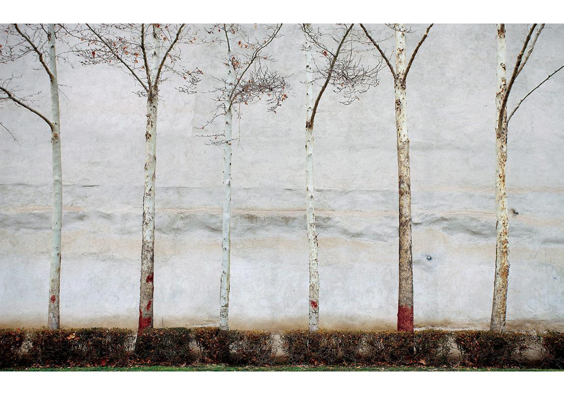 İsimsiz, 'Ağaçlar' serisinden © Abbas Kiarostami, CerModern izniyle