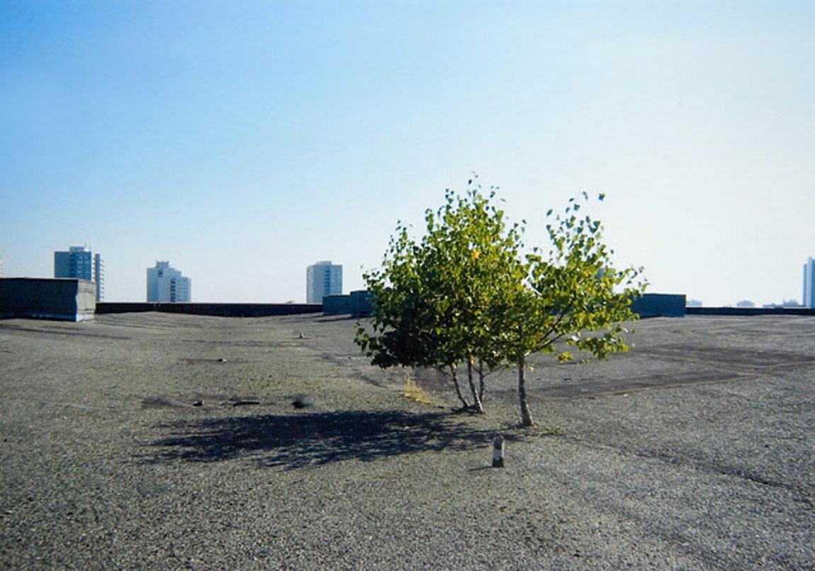 """Restgrün"", 2005,Copyright Ulrike Mohr / VG Bild-Kunst,Fotographer: the artist"