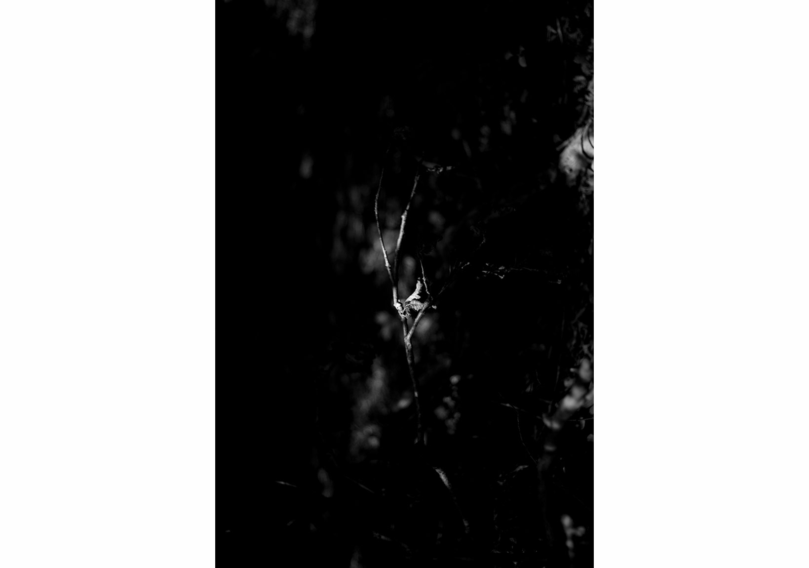 Aslı Narin, Rüzgarı Düşün/Think of the Wind(10), 2015, Diasec baskı/print, 40x27cm