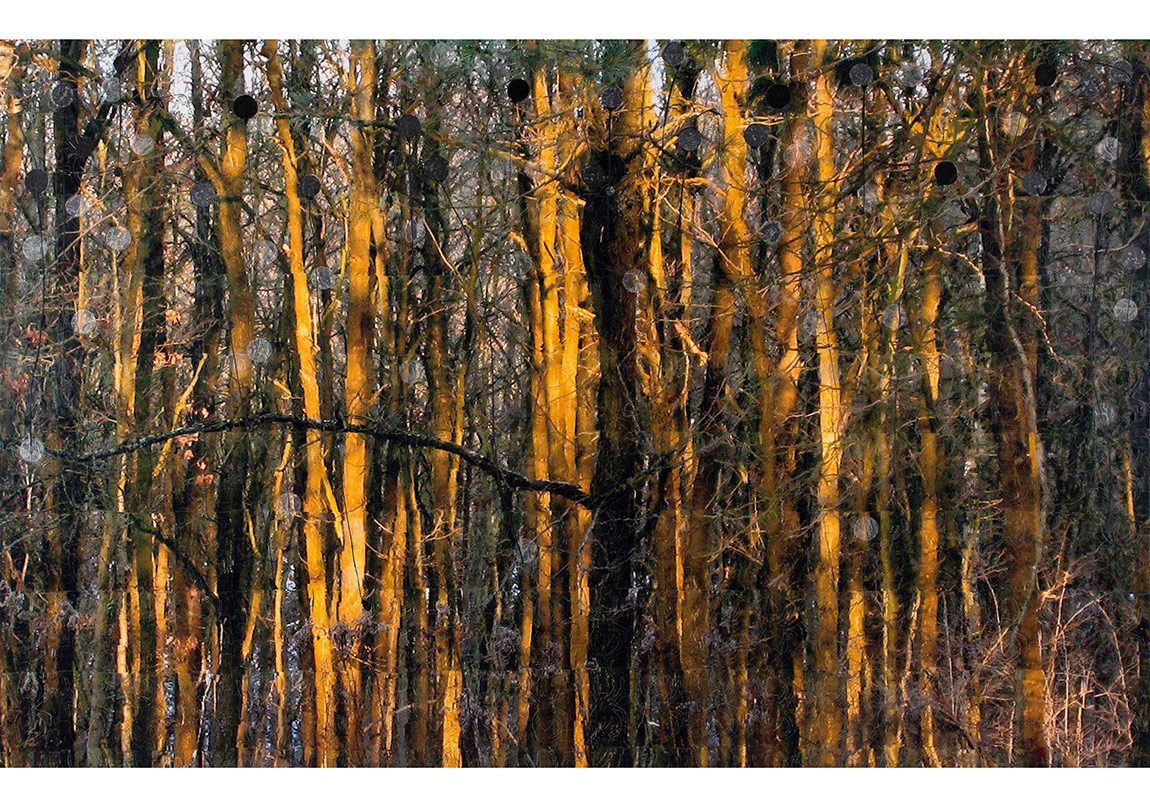 Azade KökerKış Ormanı / Winter Forest, 2016Tuval üzerine karışık teknik / Mixed media on canvas130 x 200 cm