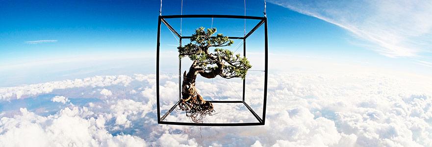 Ağaç Barıştır