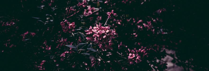Patolojik Kıskançlığın Avucunda: Zehra