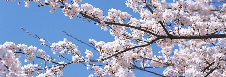 Bu Sabah Mutluluğa Aç Pencereni, Bahar Geliyor!
