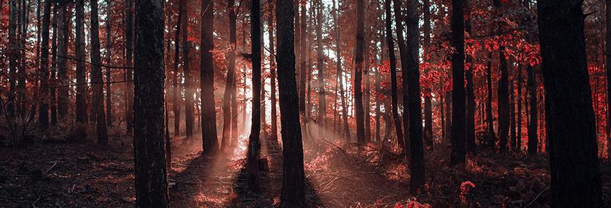 Adsız Ağaçların Gölgesinde