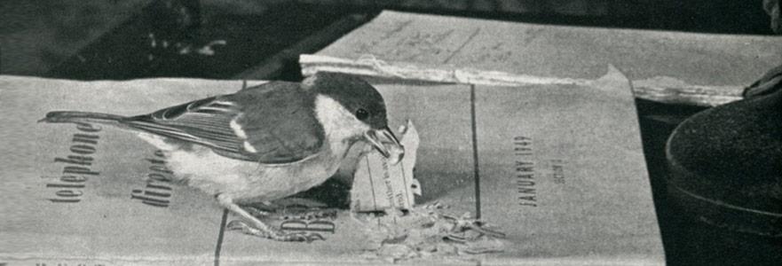 İnsanlara Uzak, Kuşlara Yakın Bir Yaşam