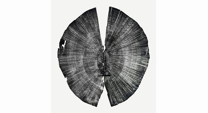 Yaşam İzleri Taşıyan Ağaç Dokuları
